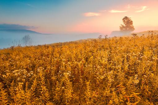 Free Stock Photo of Misty Canaan Valley Sunrise - Gold Pastel Fantasy HDR