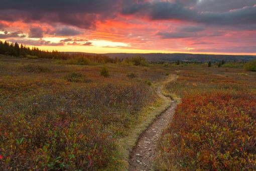 Free Stock Photo of Dolly Sods Twilight Trail - HDR