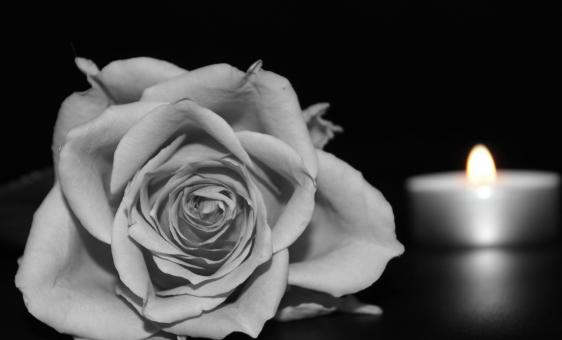 Free Stock Photo of Rose and a Candle