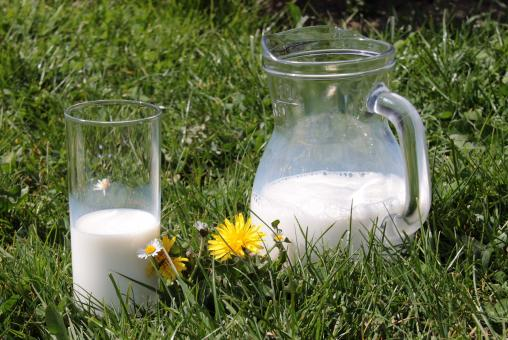 Free Stock Photo of Glass of Milk in Nature