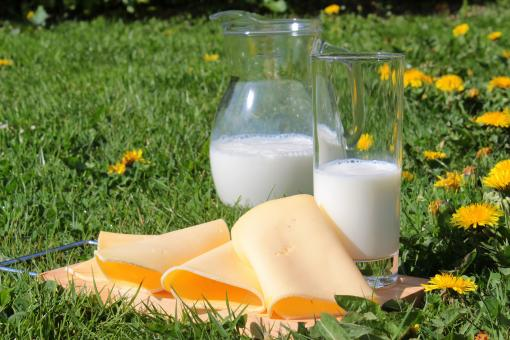 Free Stock Photo of Milk and Cheese Picnic