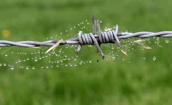Free Stock Photo of Barb Wire Fence