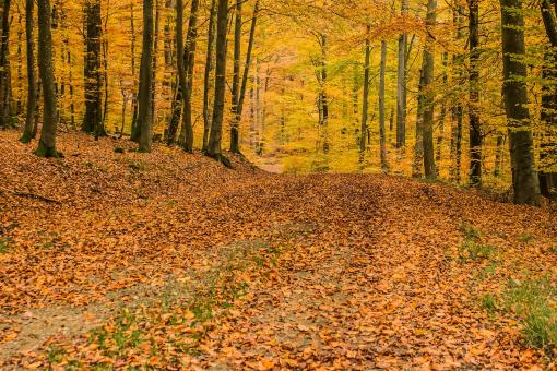 Free Stock Photo of Deciduous Forest