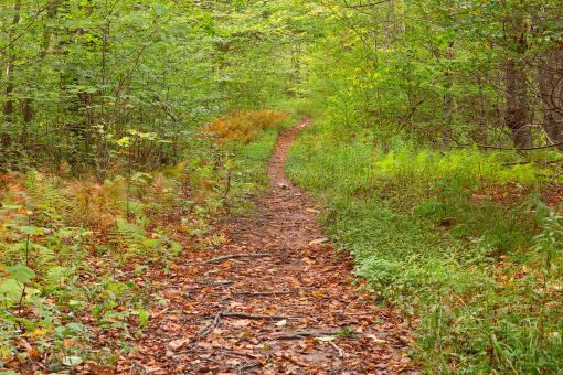 Free Stock Photo of Dolly Sods Wildlife Forest Trail