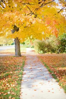 Free Stock Photo of Sidewalk in Autumn