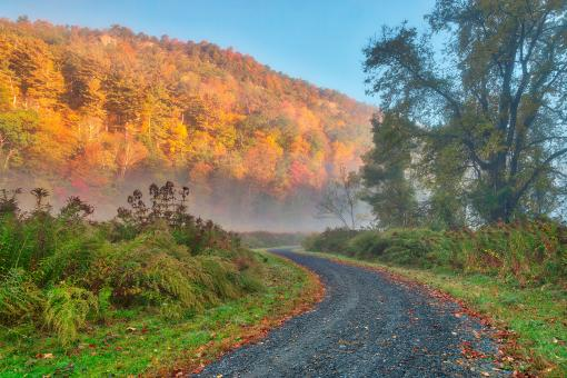 Free Stock Photo of Misty Autumn McDade Trail - HDR