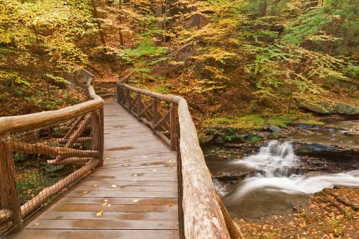 Free Stock Photo of Autumn Boardwalk Bridge