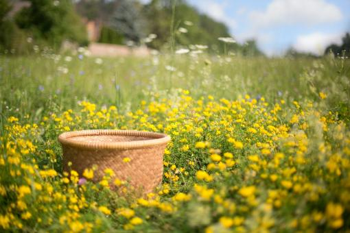 Free Stock Photo of Basket in the Field
