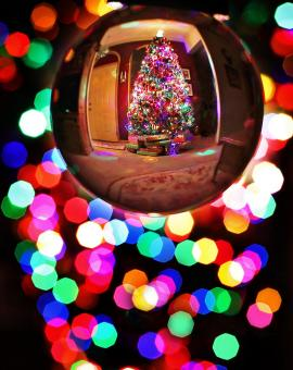 Free Stock Photo of Bauble Reflecting a Christmas Tree