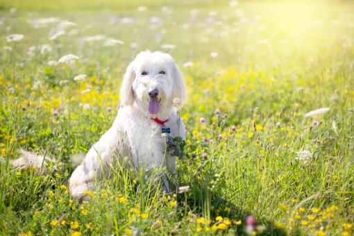 Free Stock Photo of Dog in the Garden