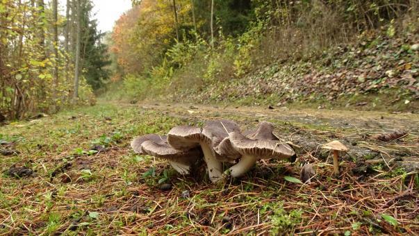 Free Stock Photo of Wild Mushrooms