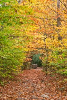 Free Stock Photo of Rocky Autumn Forest Trail