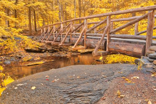 Free Stock Photo of Golden Autumn Log Bridge - HDR