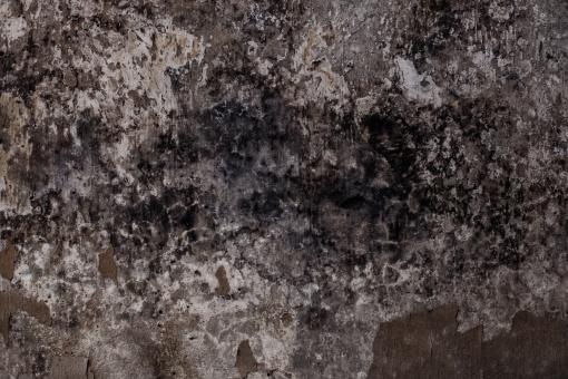 Free Stock Photo of Extreme Grungy Molded Wall Texture