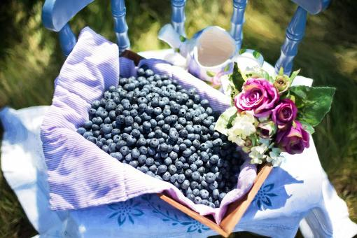 Free Stock Photo of Blueberries in the Basket