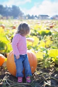 Free Stock Photo of Little Girl with Pumpkin