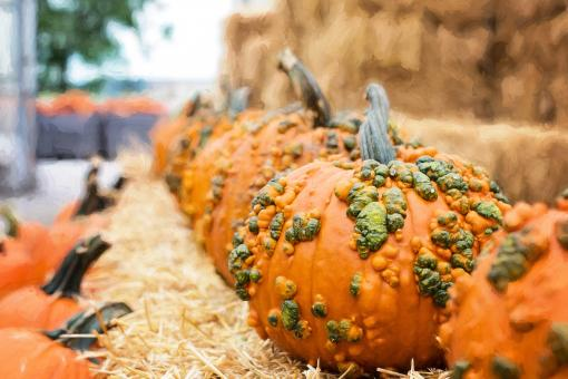 Free Stock Photo of Pumpkin Closeup