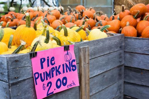 Free Stock Photo of Deal on Pumpkins
