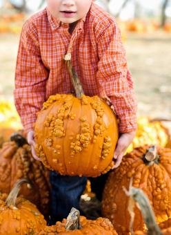 Free Stock Photo of Holding a Pumpkin