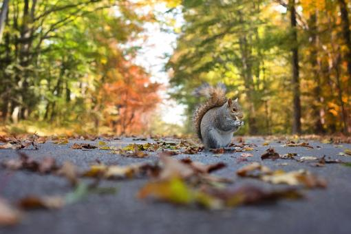 Free Stock Photo of Squirrel on the Road