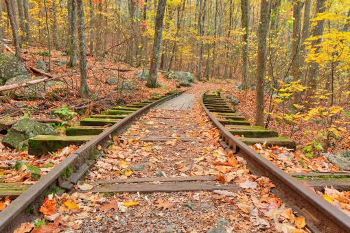 Free Stock Photo of Autumn Logging Railroad - HDR