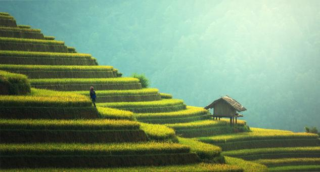 Free Stock Photo of Rice Plantation in Asia
