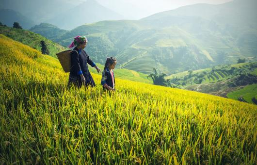 Free Stock Photo of Woman with her Child in the Rice Field