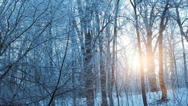 Free Stock Photo of Icy Trees