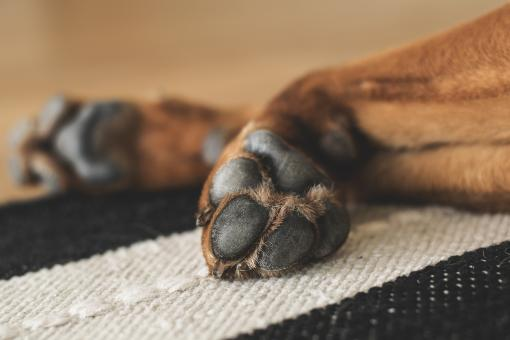 Free Stock Photo of Animal Paws