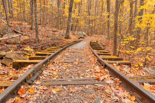 Free Stock Photo of Gold Autumn Logging Railroad - HDR