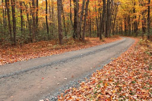 Free Stock Photo of Winding Autumn Forest Road - Hickory Run