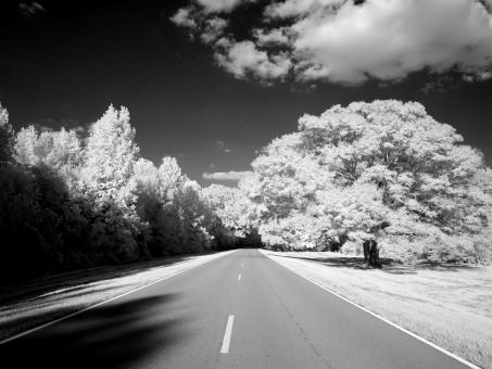 Free Stock Photo of Natchez Trace Parkway