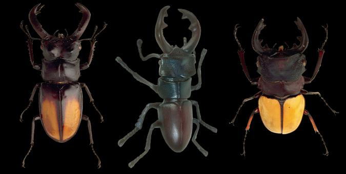 Free Stock Photo of Wild Beetles