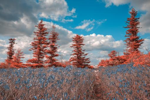 Free Stock Photo of Dolly Sods Dreamland - HDR