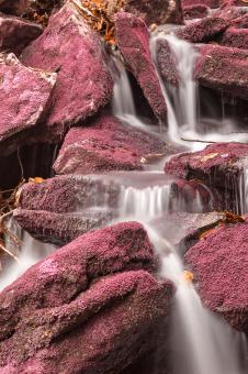 Free Stock Photo of Pink Moss Waterfall