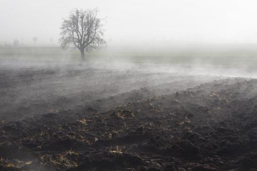 Free Stock Photo of Foggy Field