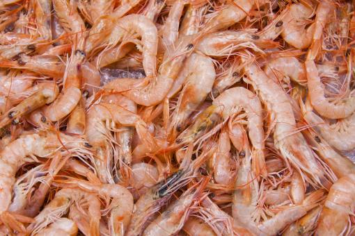 Free Stock Photo of Shrimps