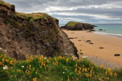 Free Stock Photo of Rugged Irish Wildflower Coast - HDR
