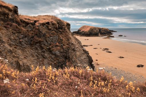 Free Stock Photo of Rugged Irish Wildflower Coast - Pastel Fantasy HDR