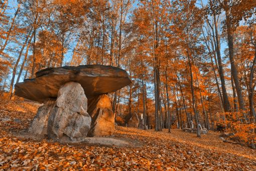 Free Stock Photo of Amber Dolmen Forest - HDR