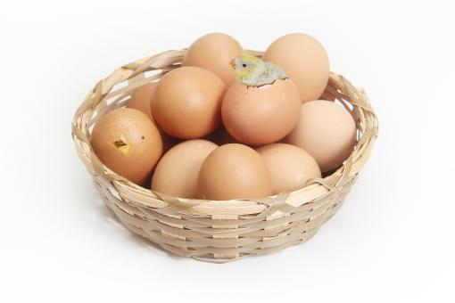 Free Stock Photo of Eggs in the Basket