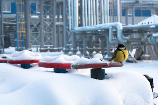 Free Stock Photo of Bird on Valve in Snow
