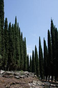 Free Stock Photo of Cypress