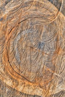 Free Stock Photo of Wooden Embryo - HDR Texture