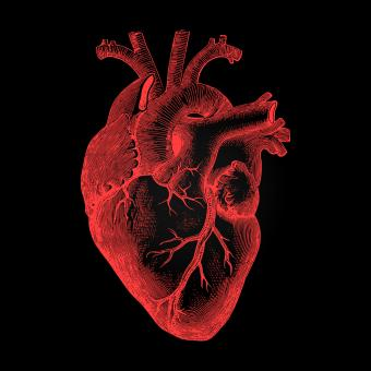 Free Stock Photo of Human Heart - Anatomical Rendering on Dark Background