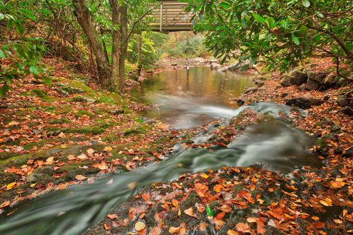 Free Stock Photo of Autumn Hawk Stream - HDR