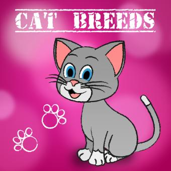 Free Stock Photo of Cat Breeds Shows Bred Pets And Kitty