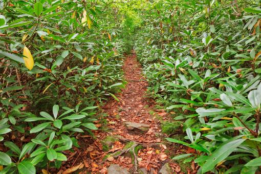 Free Stock Photo of Rhododendron Canopy Trail
