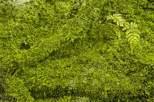 Free Stock Photo of Green Grunge Moss
