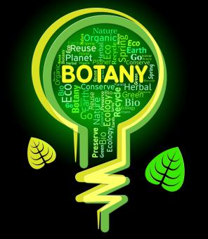 Free Stock Photo of Botany Lightbulb Represents Nature Rural And Eco